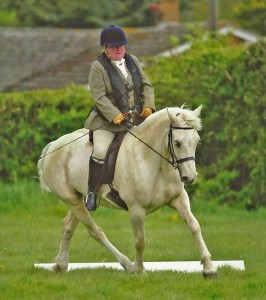 Palomino dressage Welsh Cob mare, dressage, Aberaeron Blodyn Tatws.