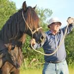 Emyr Evans Nobby, Welsh cob mare part-bred foal.