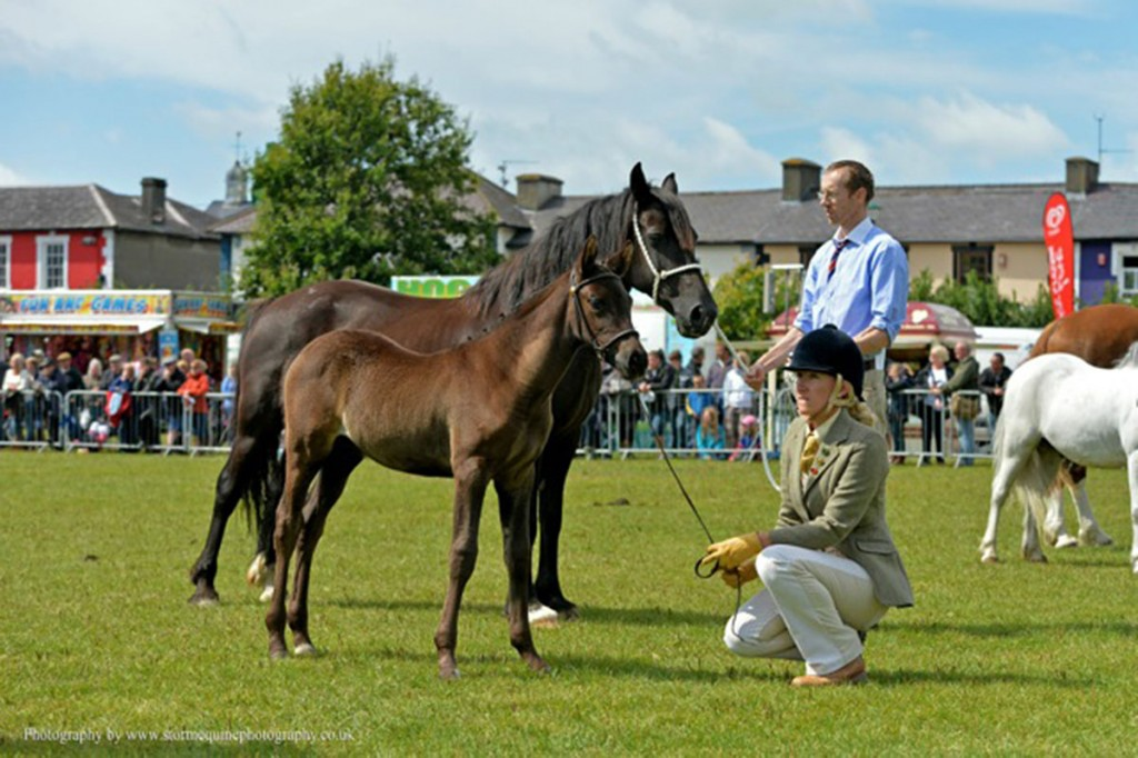 Black Bess and Zara at the Aberaeron Festival of Welsh Ponies & Cobs, 2014.