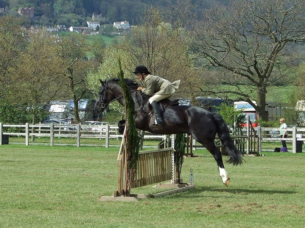 Aberaeron Telynor ap Tywysog AKA Robbie - owned and ridden by Nikki Brewer. Shown here at the West Midlands Stallion show at Malvern in 2011 at 17 years old. Photo: June Hunt 'Welsh Breeds News'.