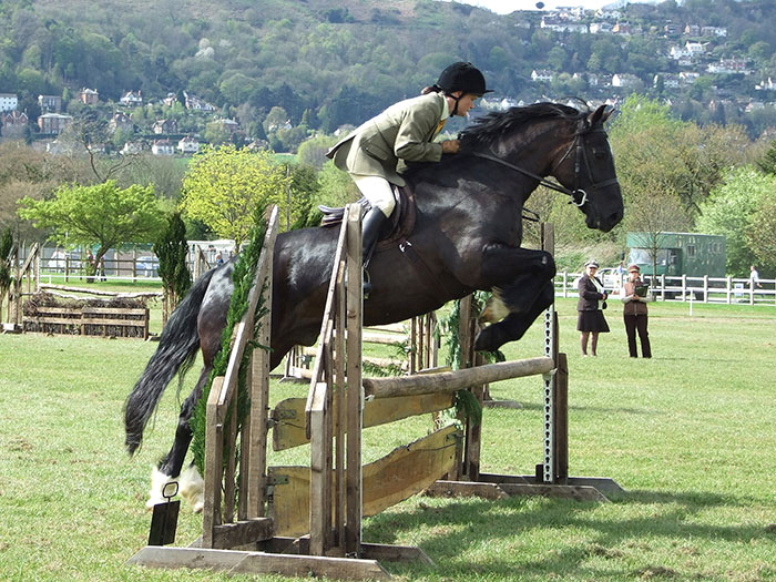 Aberaeron Telynor ap Tywysog AKA Robbie - owned and ridden by Nikki Brewer. Shown here at the West Midlands Stallion show at Malvern in 2011 at 17 years old. His last season doing working hunter classes - placed 3rd and 4th in the two classes entered.Photo: June Hunt 'Welsh Breeds News'.