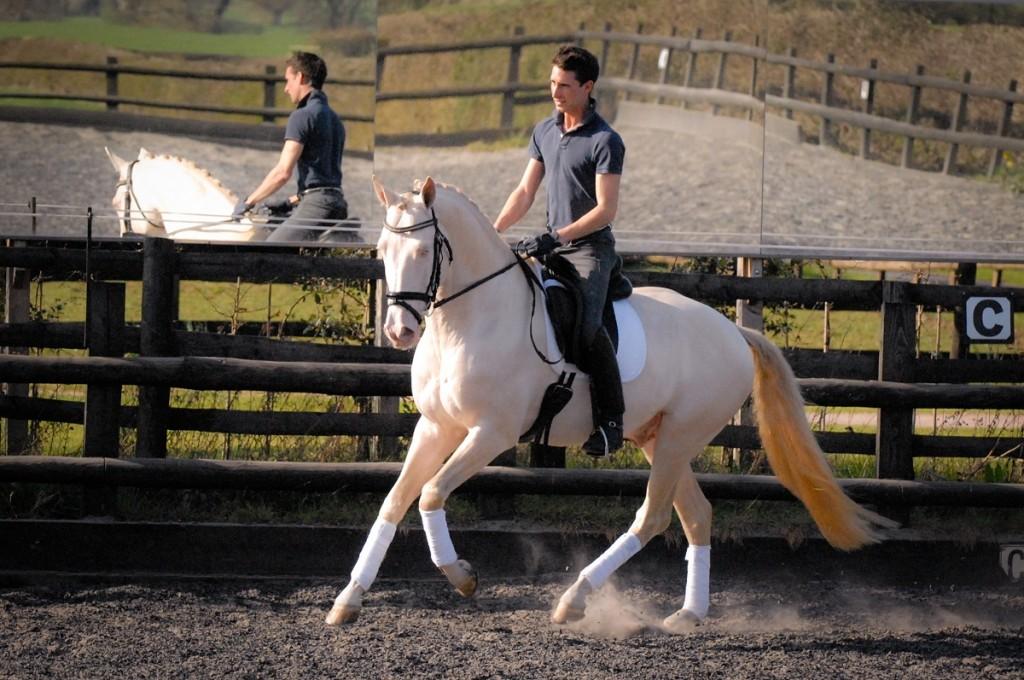 Kambarbay – Akhal Teke Eventing Stallion.